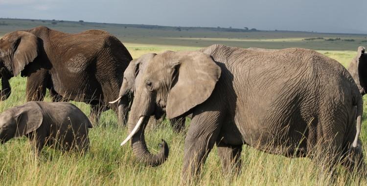 Jane Austen and Elephants